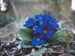 Flower Garden Bokeh | 18. April 2020 | Tarbek - Schleswig-Holstein - Germany