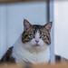 Portrait d'un chat / Portrait of a cat