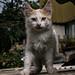 gatito salvajado de techo