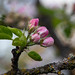 Apple blossom bokeh