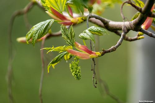 De lente is in de lucht - La primavera esta en el aire - Spring is in the air