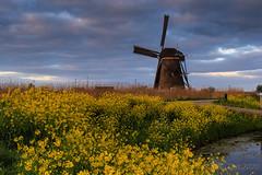 Wildflowers @ Kinderdijk