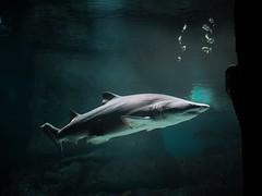 Anglų lietuvių žodynas. Žodis cartilaginous fish reiškia kremzlinėms žuvims lietuviškai.