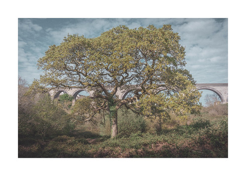 "The Old Oak • <a style=""font-size:0.8em;"" href=""http://www.flickr.com/photos/110479925@N06/49803185032/"" target=""_blank"">View on Flickr</a>"