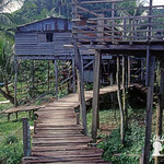 Longhouse Iban sul Sungai Sut, Sarawak, Malesia