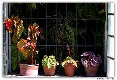 plantas al sol