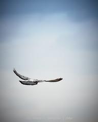 Pájaro1