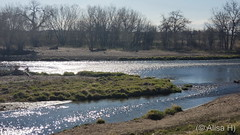April 22, 2020 - A pretty scene along the South Platte River. (Alisa H)
