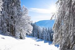 Trämpl - Winter Landscape
