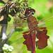 Carolina saddlebags in wildflowers