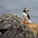 Puffin on a rock on St Kilda
