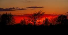 Sonnenuntergang | 25. April 2020 | Tarbek - Schleswig-Holstein - Deutschland