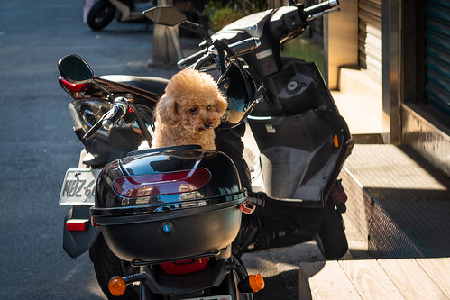 Taiwan Series - Biker Poodle