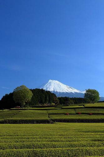 View Point of Mt.Fuji & Tea plantation Obuchi Sasaba