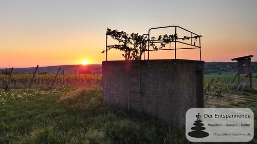 Wingertshäuschen und Sonnenaufgang in den Weinbergen - SunriseRun Dalheim/Friesenheim