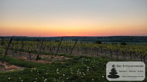 Sonnenaufgang über den Rebstöcken - SunriseRun Dalheim/Friesenheim
