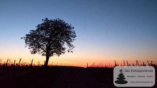 In den Weinbergen über Selzen - SunriseRun Dalheim/Friesenheim