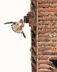 Pájaro3
