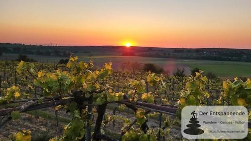 Sonnenaufgang in den Weinbergen - SunriseRun Dalheim/Friesenheim