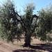 Oliveto ex Di Battista 27 aprile 2020_10
