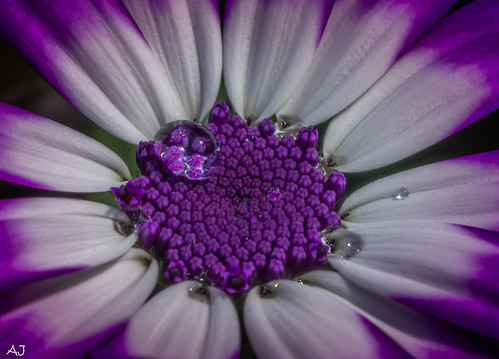 Stay at home: macro photography in the garden