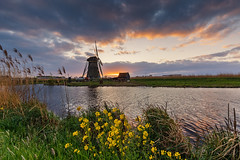 Flowers and a mill @ Kinderdijk