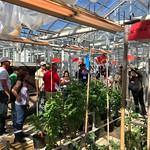 Peru, Ecuador, Venezuela Cochran - greenhouses