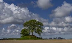 Landscape from Denmark