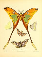 Anglų lietuvių žodynas. Žodis genus smilax reiškia genties smilax lietuviškai.