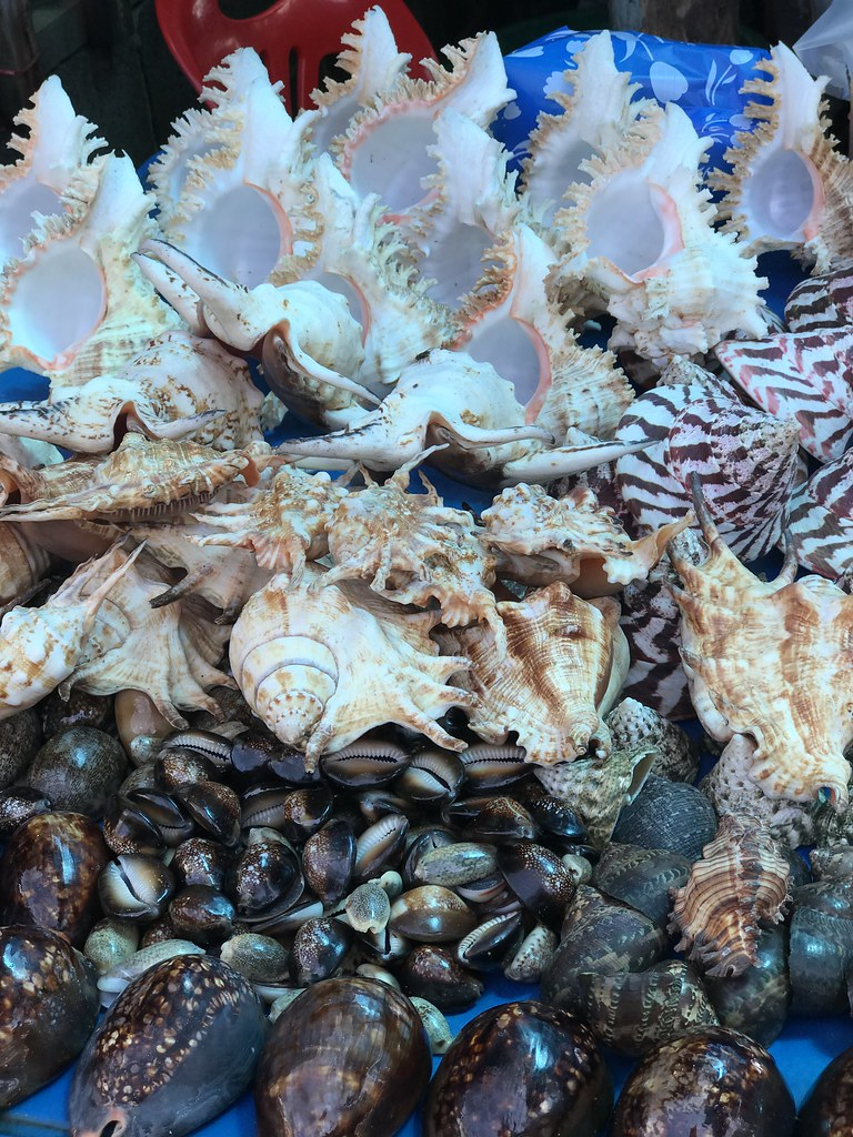 Conch, abalone and other assorted shellfish on sale