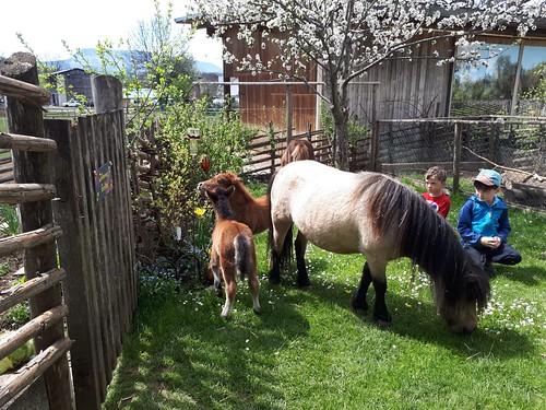 Der April hat es in sich....Babyboom am Ponyhof