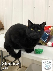 Shadow - 2 year old neutered male