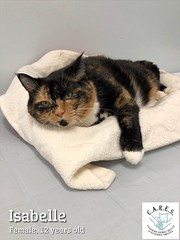 Isabelle - 12 year old spayed female