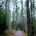 Rainy forest path