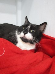 Kobe - 7 year old neutered male
