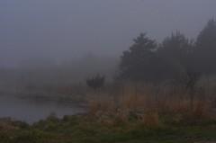 Beautiful Foggy Morning.