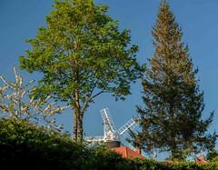 Holgate Windmill, April 2020 - 8