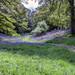 Kinclaven Wood _MG_9429