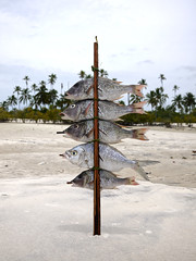 Mafia Island 2012