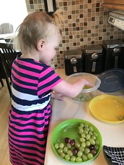 """Dani Picks Grapes • <a style=""""font-size:0.8em;"""" href=""""http://www.flickr.com/photos/109120354@N07/49851867893/"""" target=""""_blank"""">View on Flickr</a>"""