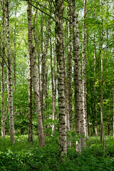 Bos voorjaar kleuren - Colores de la primavera forestal - Forest spring colors