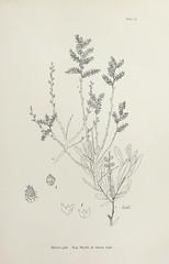 Anglų lietuvių žodynas. Žodis common myrtle reiškia bendras myrtle lietuviškai.