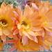 Basic Cactus Flowers