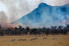 Fire in Serengeti