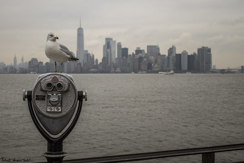 Manhattan skyline from Liberty Island with an unexpected protagonist