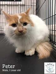 Peter - 2 year old neutered male
