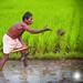 Agriculteur de subsistance - Tamil Nadu - Inde.