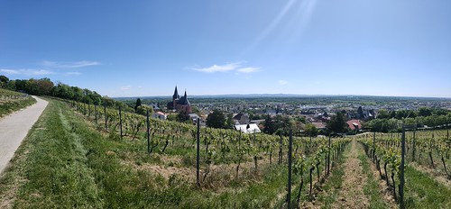 Katharinenkirche Oppenheim (Oppo Reno 2, Volbild, Panorama, 3,72 MB)