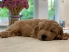 Nala taking a snooze