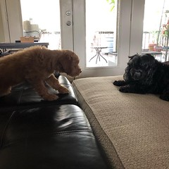 Toby and his friend